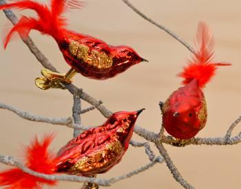 Fugle med klemme røde